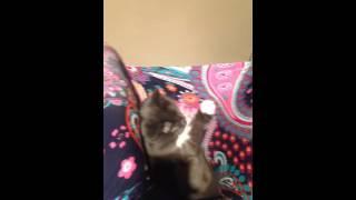 Кот в гамаке, смешной котэ