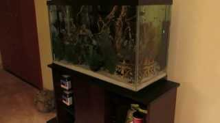 water testing my overstocked 29 gallon tank anniversary