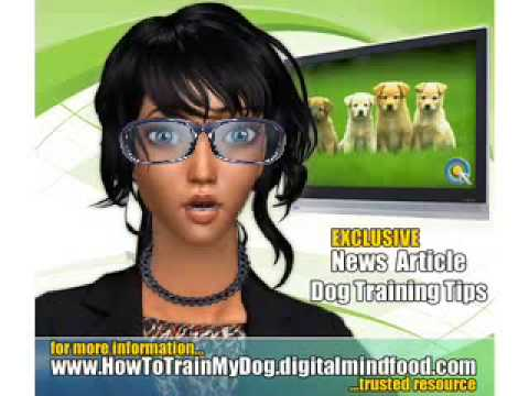 how to train your dog to stop whining