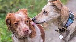 dogwalker Zürich, Hundebetreuung in der Hundeschule vom Dogsitter Zürich