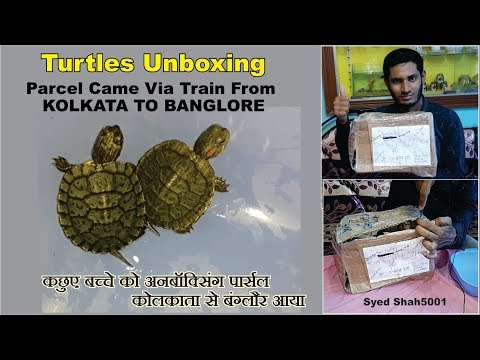 Turtle Unboxing Baby Turtles Arrive Unboxing
