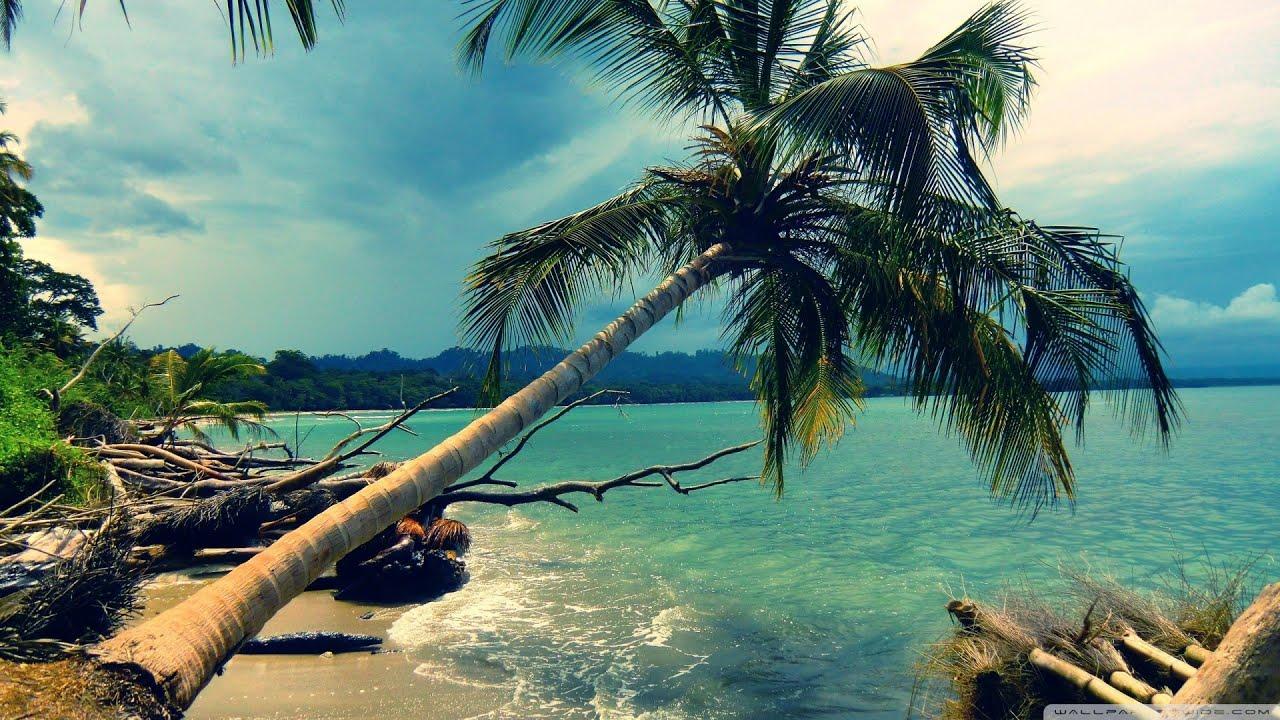 Hd Coconut Tree Seaside Landscape Nature Wallpaper Living: Best Of Reggae [Mix 2015] HD