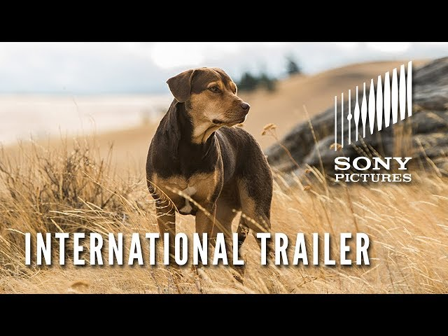 A DOG'S WAY HOME - International Trailer