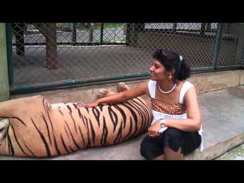 Tiger Farms in Thailand / Chiang Mai