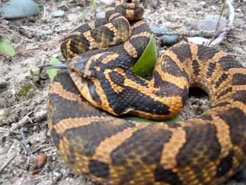 Pictures of ontario snakes