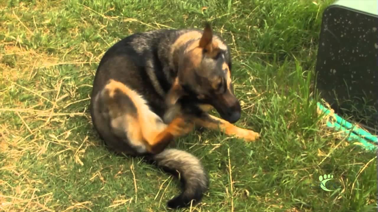 Flea and Tick: Disease & Prevention - Porter Pet Hospital