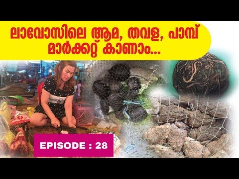 KERALA to SOUTH EAST ASIA HITCH HIKING // EP 28 // TURTLE,FROG ,MEAT MARKET