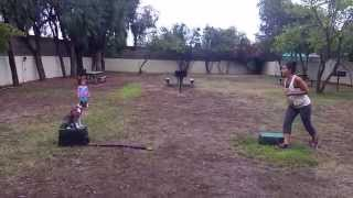 San Jose Dog Training A Pitbull Puppy, Canine Tutors Dog Training