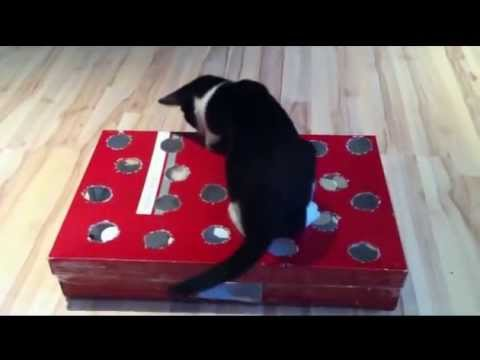 fummelbrett katz und maus selber bauen cat activity fun board youtube. Black Bedroom Furniture Sets. Home Design Ideas