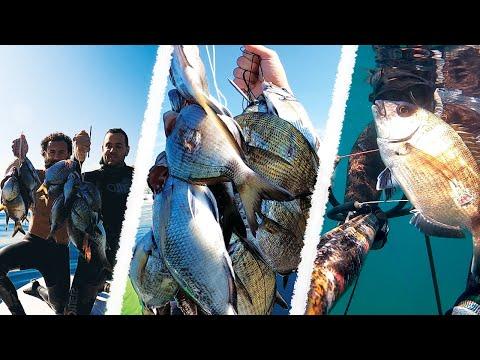 Hunting Seabreams in