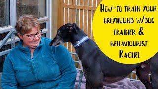 Basic Dog Training with Greyhound Guru, Dog Behaviourist & Trainer Rachel