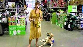 Dog Training At Lowes Shelby Graduates Dogtra E Collar