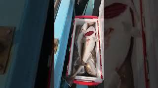 Big Fish Ocean Fishing Video fishing shorts