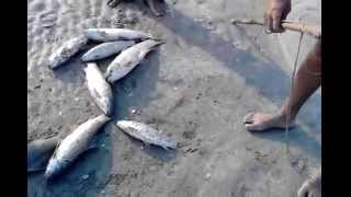 Fishing In Pakistan By KhanGroup At Baiwal 2