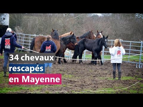 34 chevaux rescapés en Mayenne
