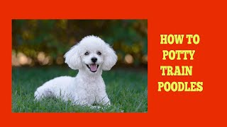 How To Easily Potty Train Poodles