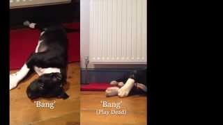 Staffy Puppy Training