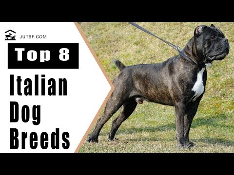 Top 8 Italian Dog Breeds