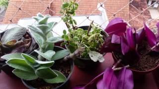 A doida das mudas! !  Ganhei muitas mudas de plantas e vim mostrar pra vocês.