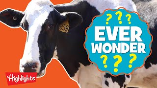 How is Ice Cream Made? | Ever Wonder? | Highlights Kids