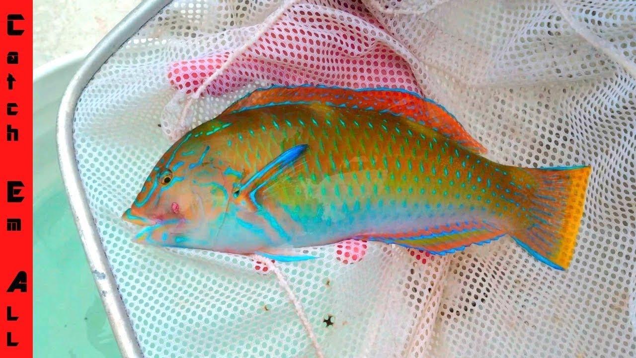 CATCHING AQUARIUM FISH for your FISH TANK at HOME! diy