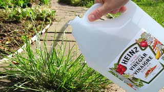Use Vinegar In Your Garden And Watch What Happens
