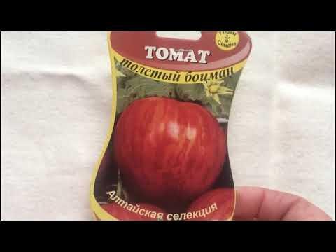 Толстый боцман!! Еще один интересный сорт томата из коллекции полосатых.. Почему я его купила??!