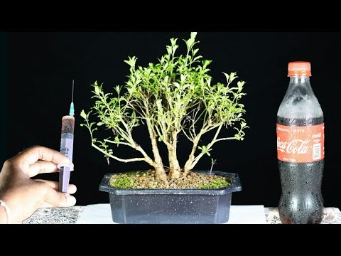 how-to-make-best-organic-fertilizer-for-your-plants