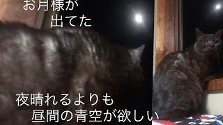 スーパームーンと黒猫!でも、眠気に勝てなかった!2月21日…15歳黒猫はち、平成31年の記録 第40話 thumbnail