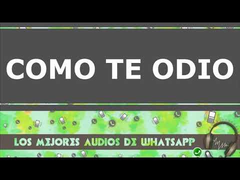 Audios de whatsapp cortos 2018 - COMO TE ODIO !!