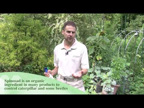 Pure Pest Control For Garden Pests