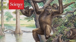 Earth was once a planet of the apesand they set the stage for human evolution