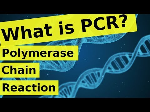 What is Polymerase Chain Reaction? | PCR Explained