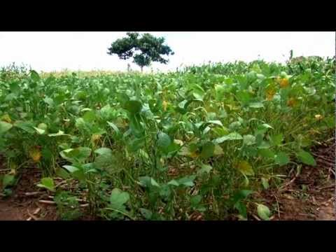 THE SHIFT FROM TOBACCO FARMING IN MALAWI