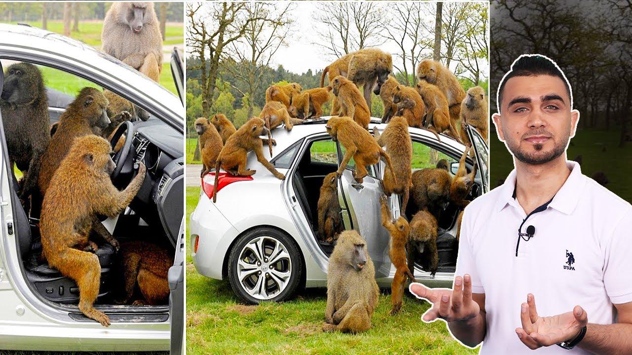 القرود تغزو مدينة كاملة وتحبس سكانها 😱فتاة تخاطر بنفسها لأجل صورة 😱