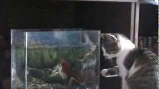 кошка и лягушка