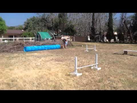 Homemade dog agility course