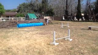 Homemade Dog Agility Course