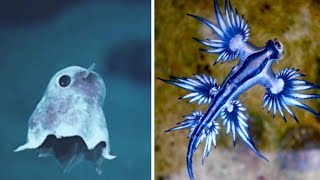 Most ADORABLE Sea Creatures