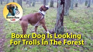 Boxer Dog Is Looking For Scary Trolls In The Forest 👺 🤖 😮