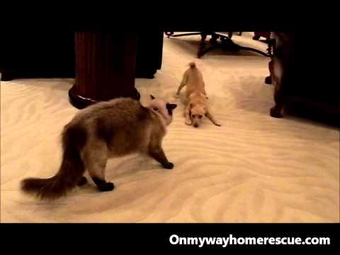 Rescued puppy meets cat...and we're off!