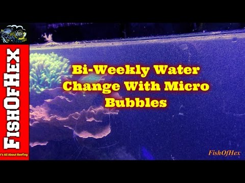 Bi-Weekly Water Change With Micro Bubbles & Cleaning Filter Socks