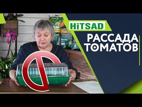 Вопрос: Почему не всходят семена томатов?