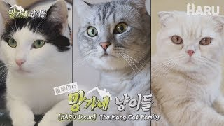"Meet the celebrity cat family, ""Go-Joo-Mangtae"""