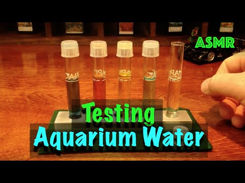 Testing Aquarium Water - ASMR