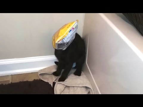 Cats Getting Stuck in Things Compilation