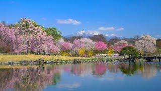 [ 4K UHD ]四季の里 緑水苑の春(福島県 郡山市・本宮市)Ryokusuien in Spring,Koriyama-Motomiya,Fukushima.