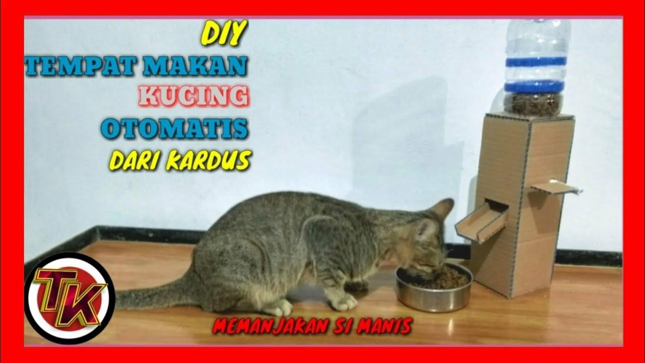 Cara Membuat Tempat Makan Kucing Dari Kardus Diy Cat Food Dispenser From Cardboard At Home Youtube