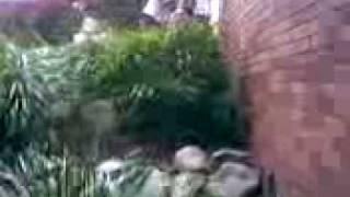 Bush Wackers XD Thumbnail