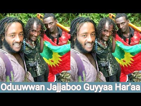 Download #WBO #Jaalmarroo INJIFANOO WBO lixaa fi lixa shaggar oduu guyyaa hara'a Afaan Oromoo |OLMAA MEDIA